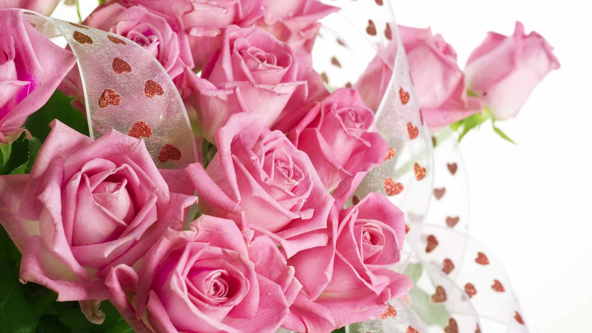 pink-rose-backgrounds-wallpaper-hd-04