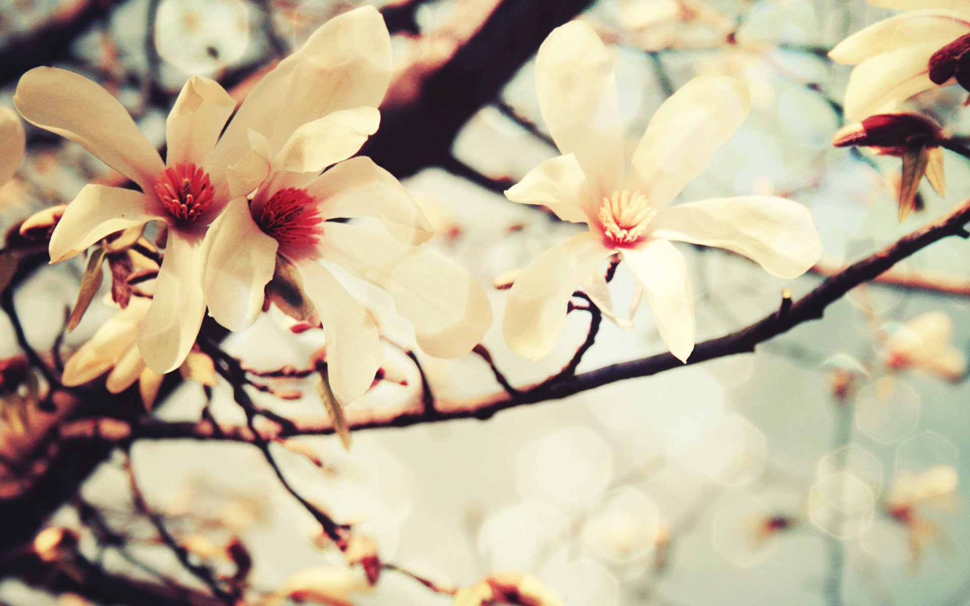 spring-flowers-picture-wallpaper-hd-download-free-01
