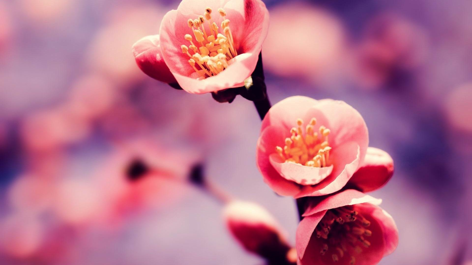 spring-flowers-picture-wallpaper-hd-download-free-06