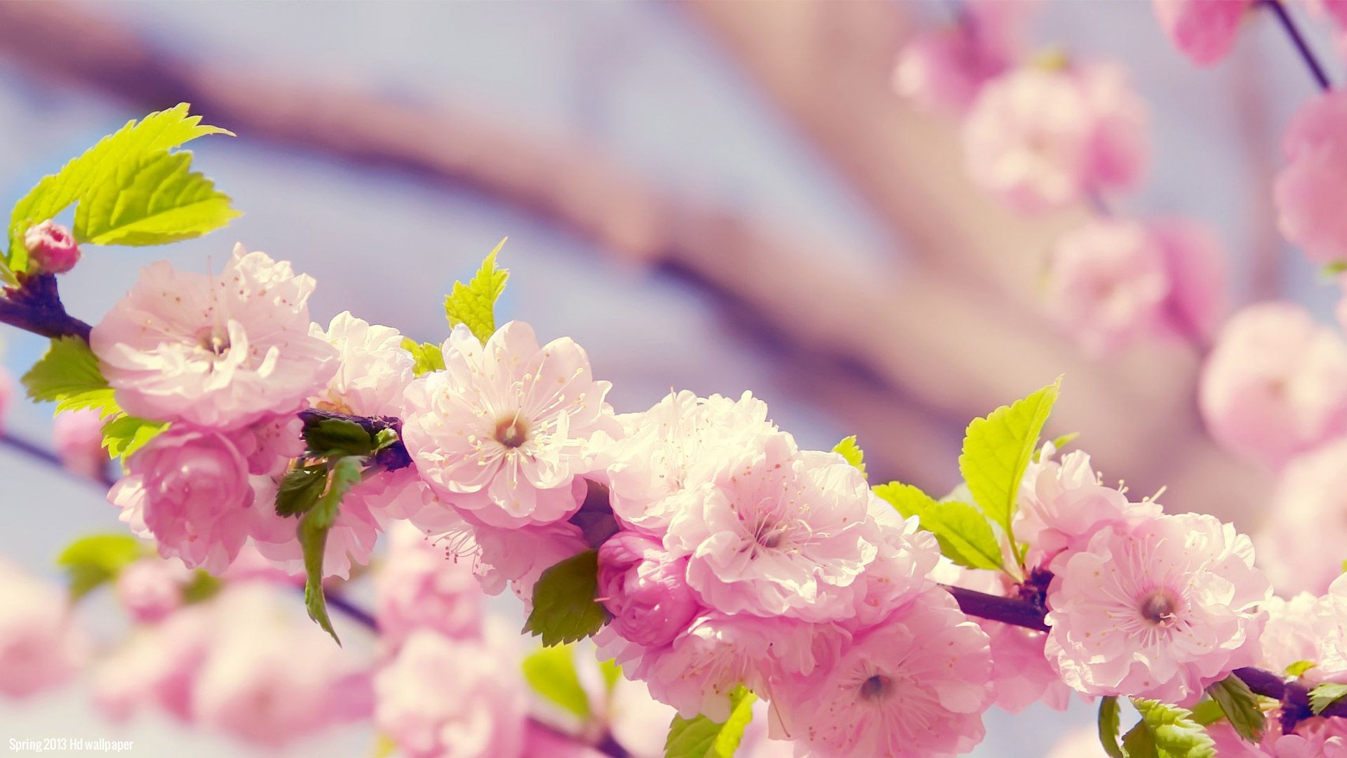 spring-flowers-picture-wallpaper-hd-download-free-07