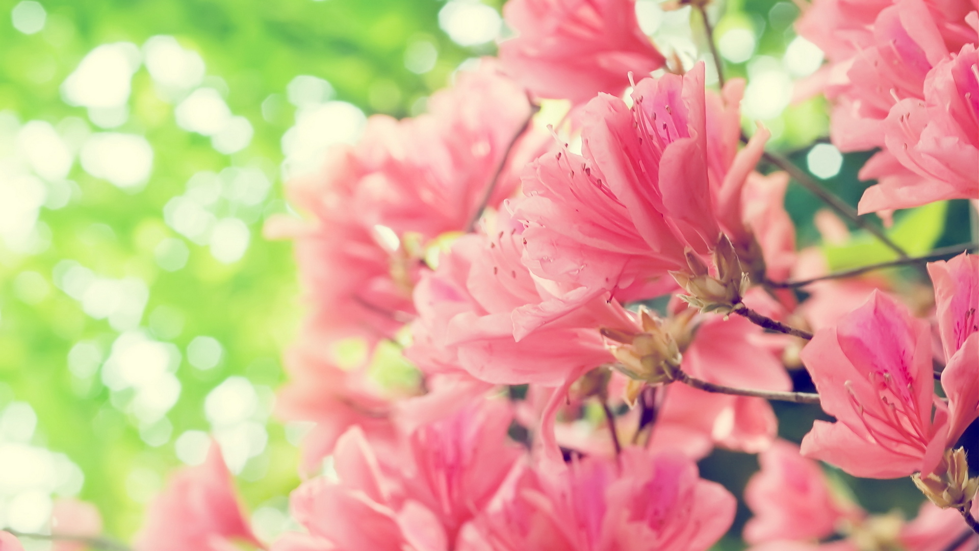 spring-flowers-picture-wallpaper-hd-download-free