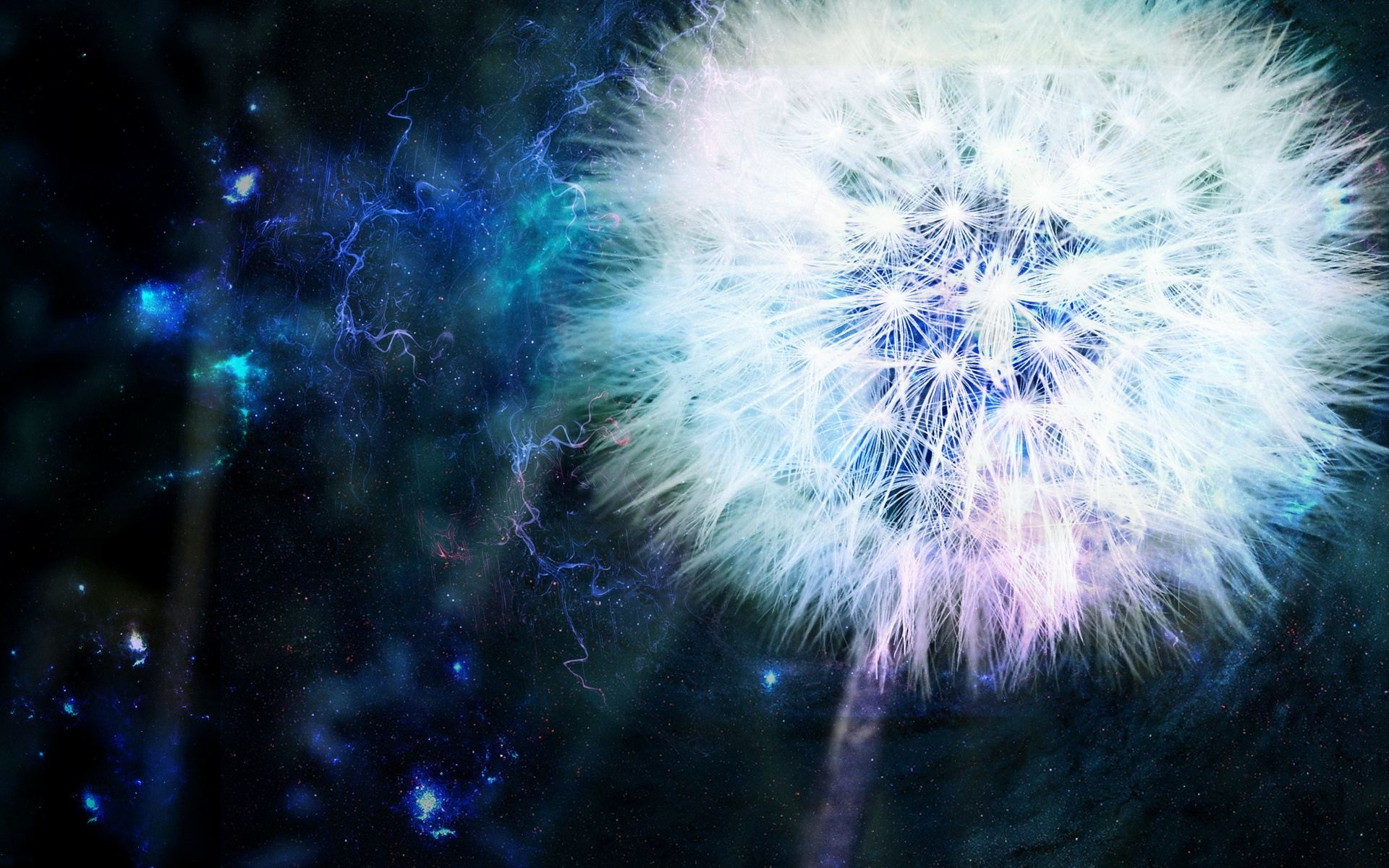 Dandelion-Background-Wallpapers-HD-Free-Download-07