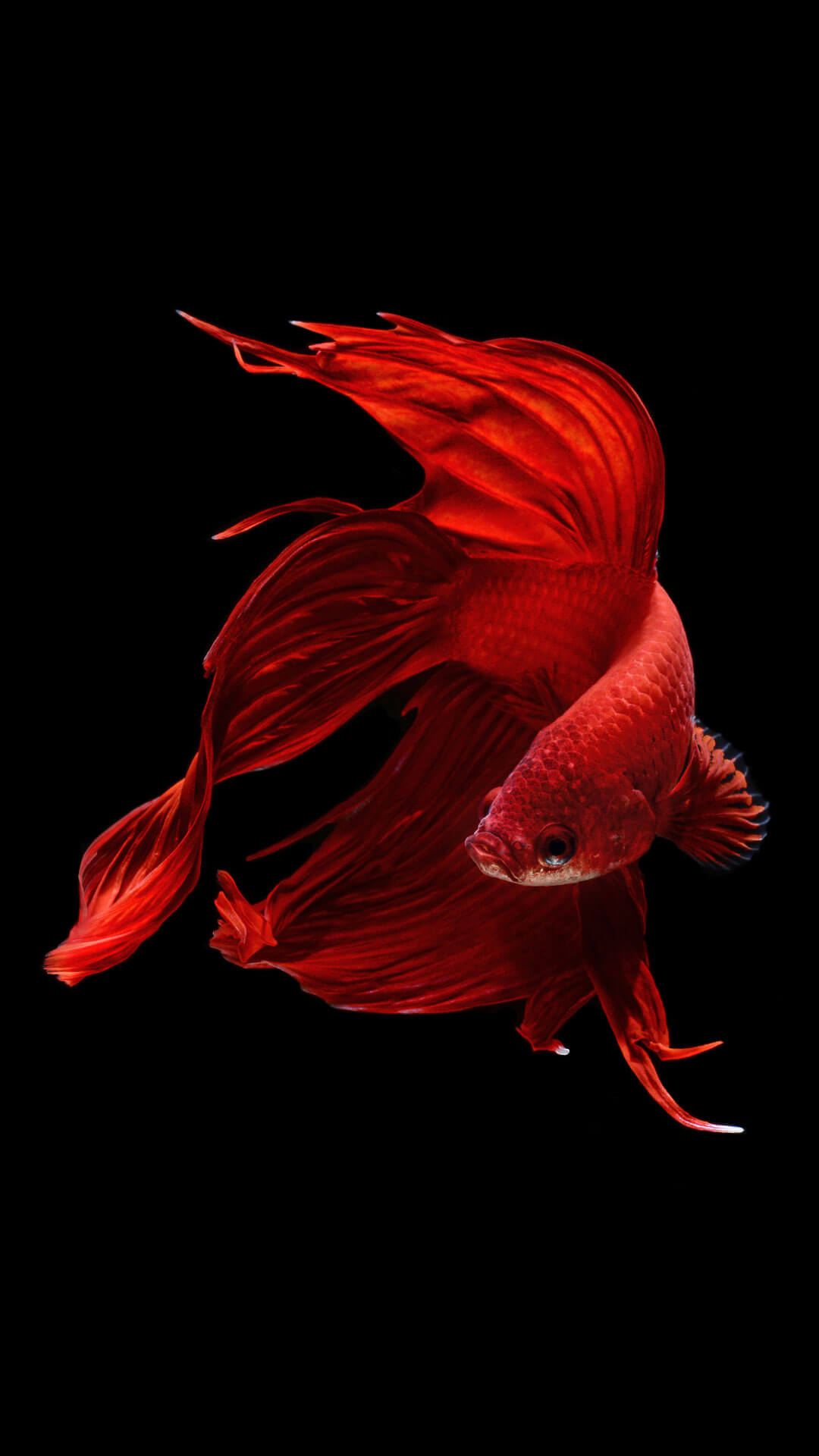 iphone live wallpaper iphone 7 fish wallpapers free 3003