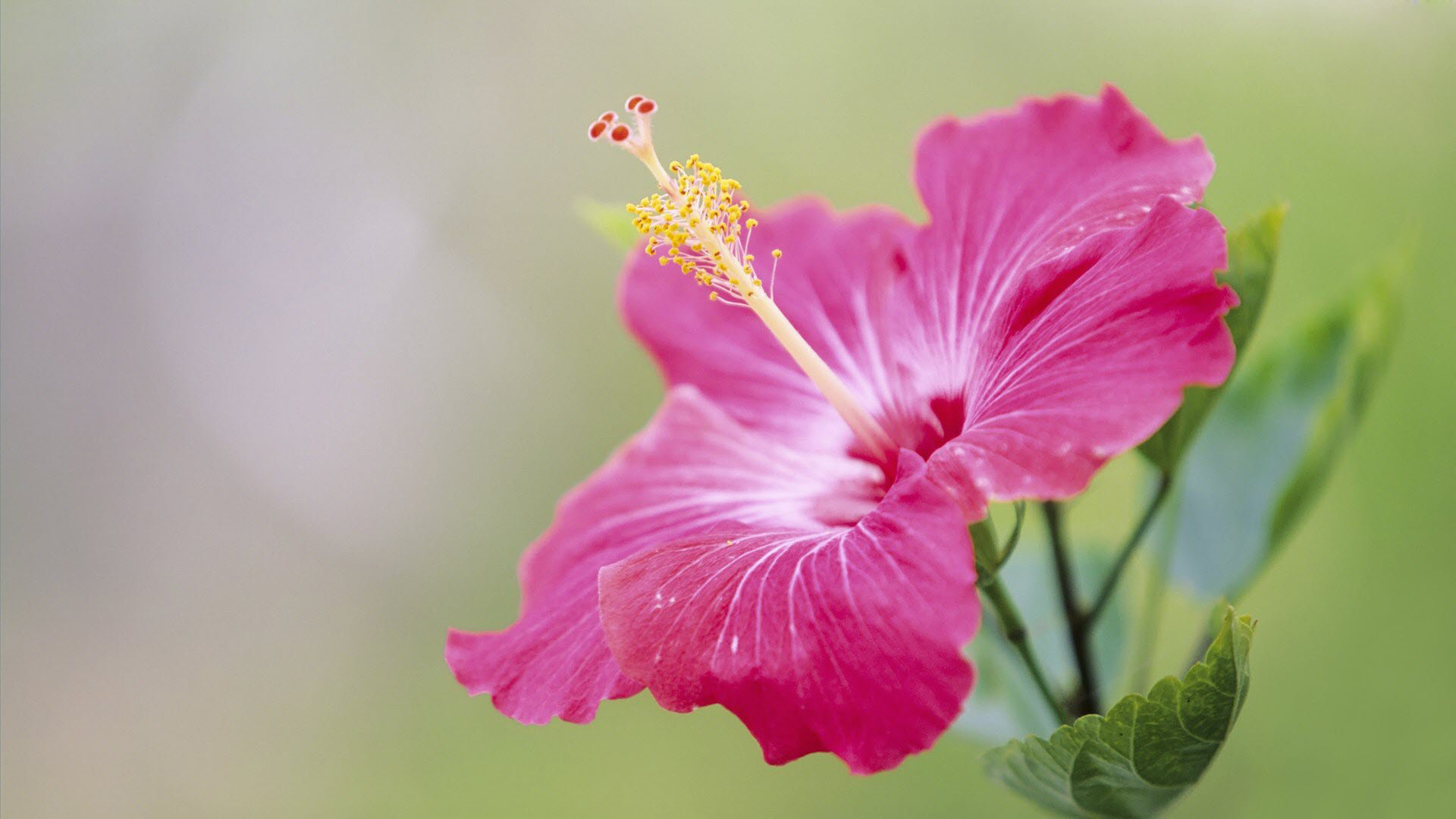 download free flower wallpaper hd