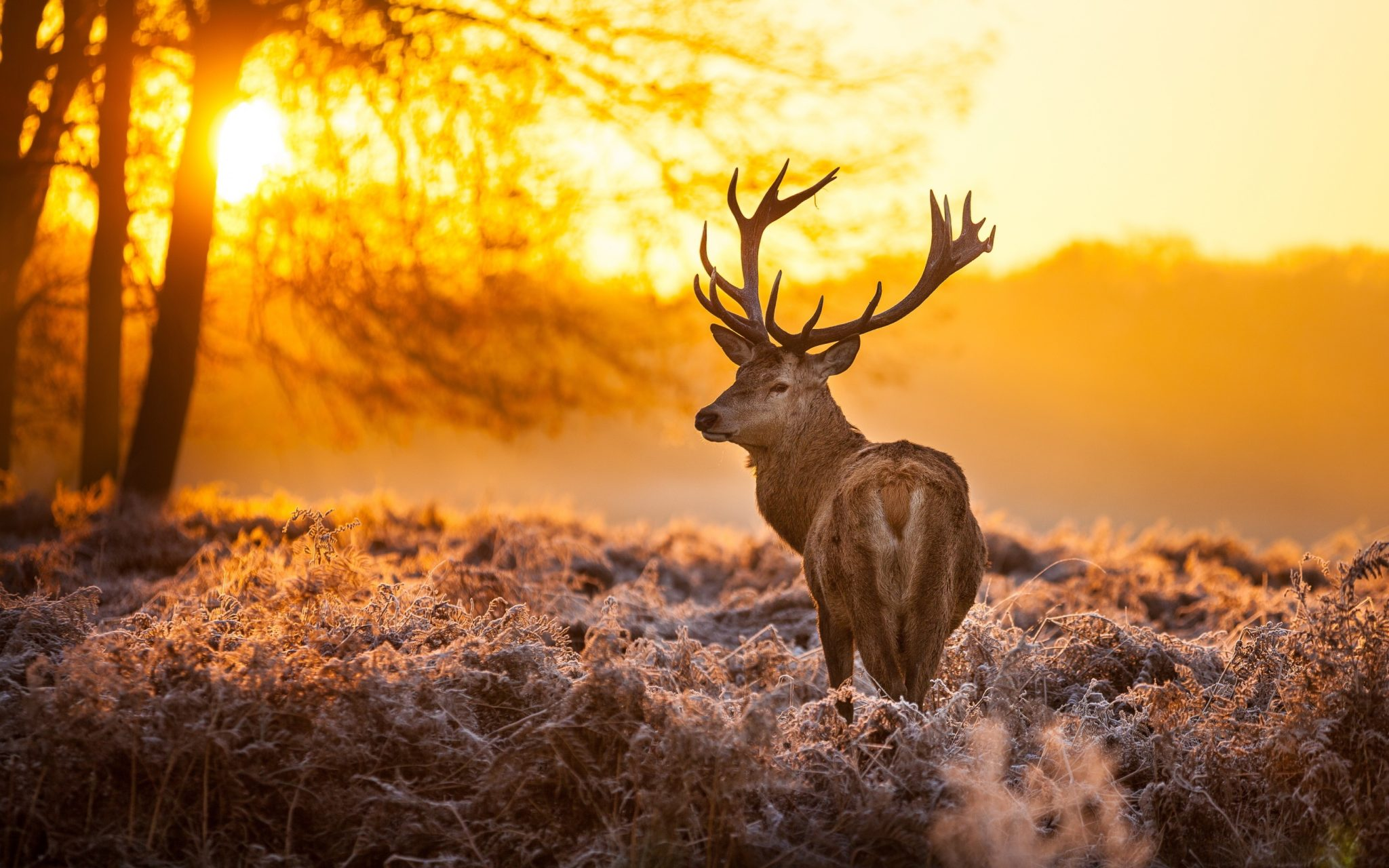 10 Most Popular Wild Animals Wallpapers Free Download Full: Free Deer Wallpapers HD And Desktop Background
