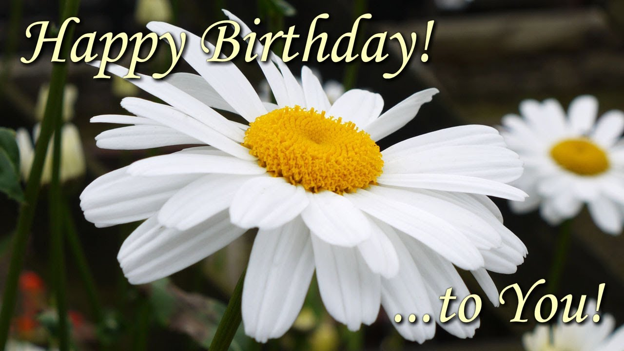 Beautiful flower pictures for birthday download free beautiful flower pictures for birthday izmirmasajfo