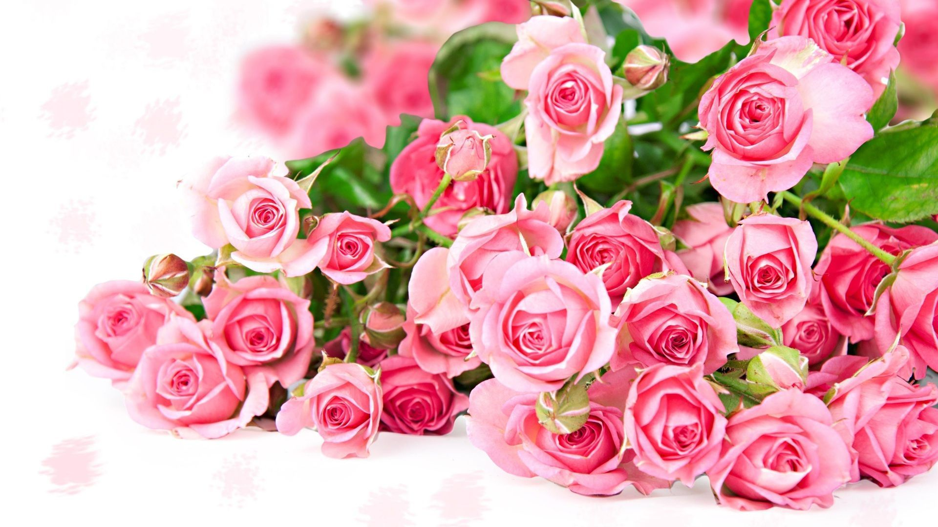 Top 10 beautiful rose flowers picture beautiful rose flower photos beautiful rose flowers background izmirmasajfo Image collections