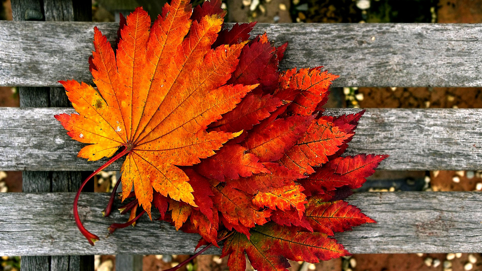 autumn wallpaper hd 1920x1080
