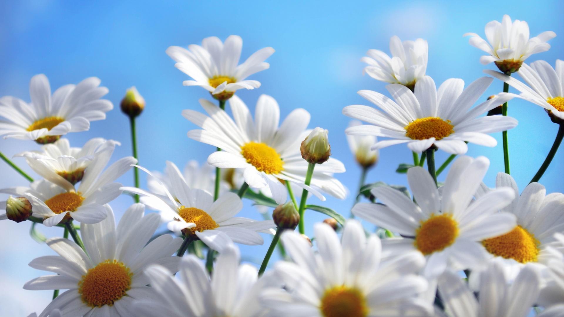 Beautiful Summer Flowers Wallpaper Hd 05
