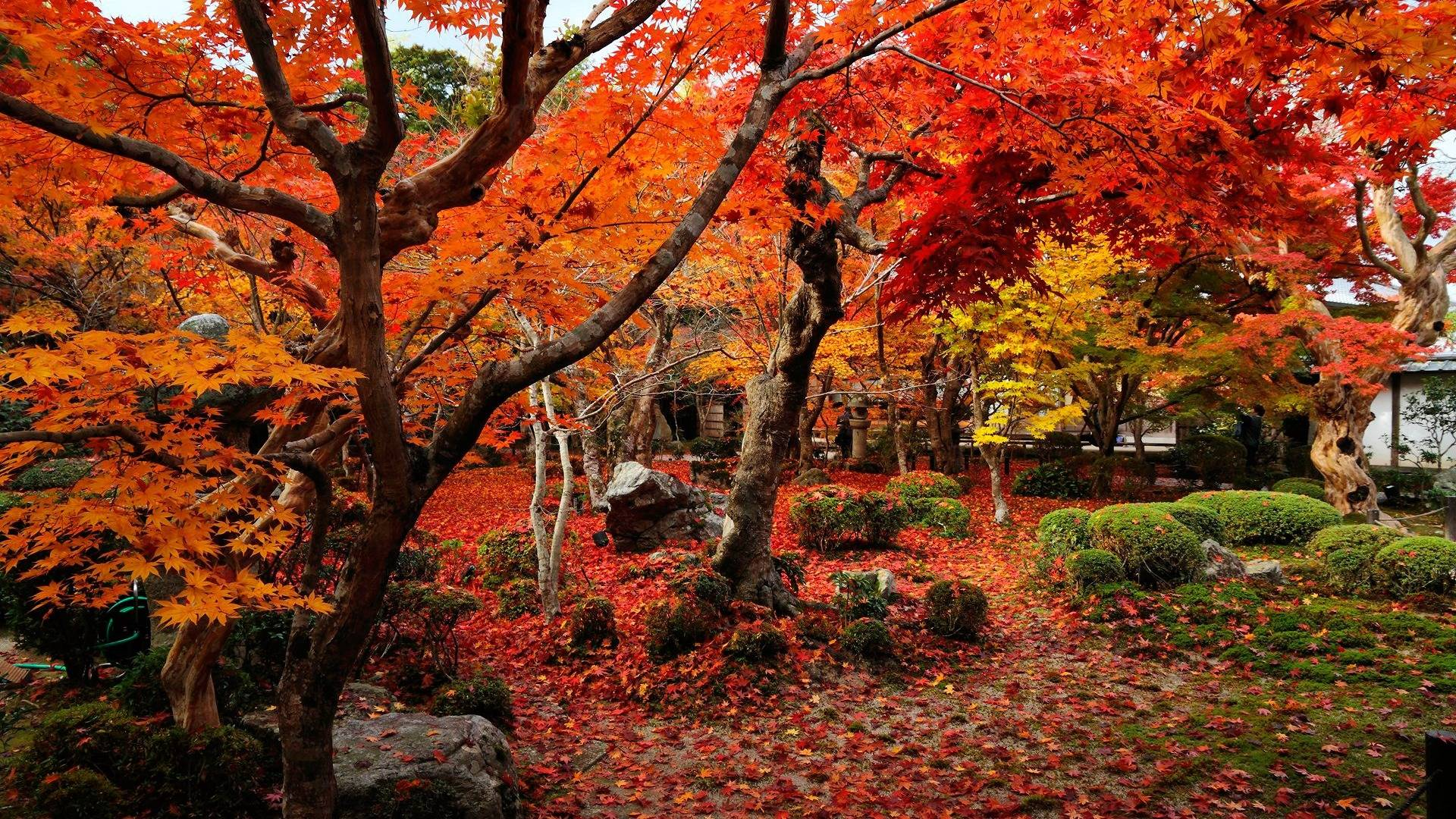 top 10 autumn backgrounds desktop