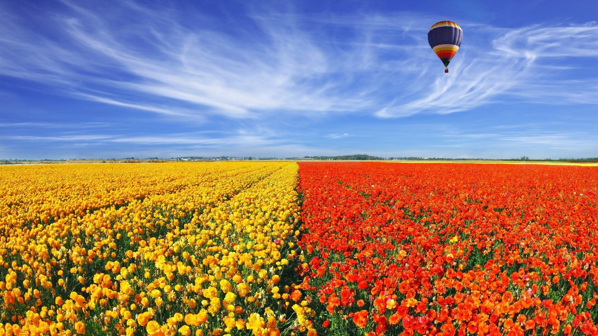 field of flowers wallpapers hd