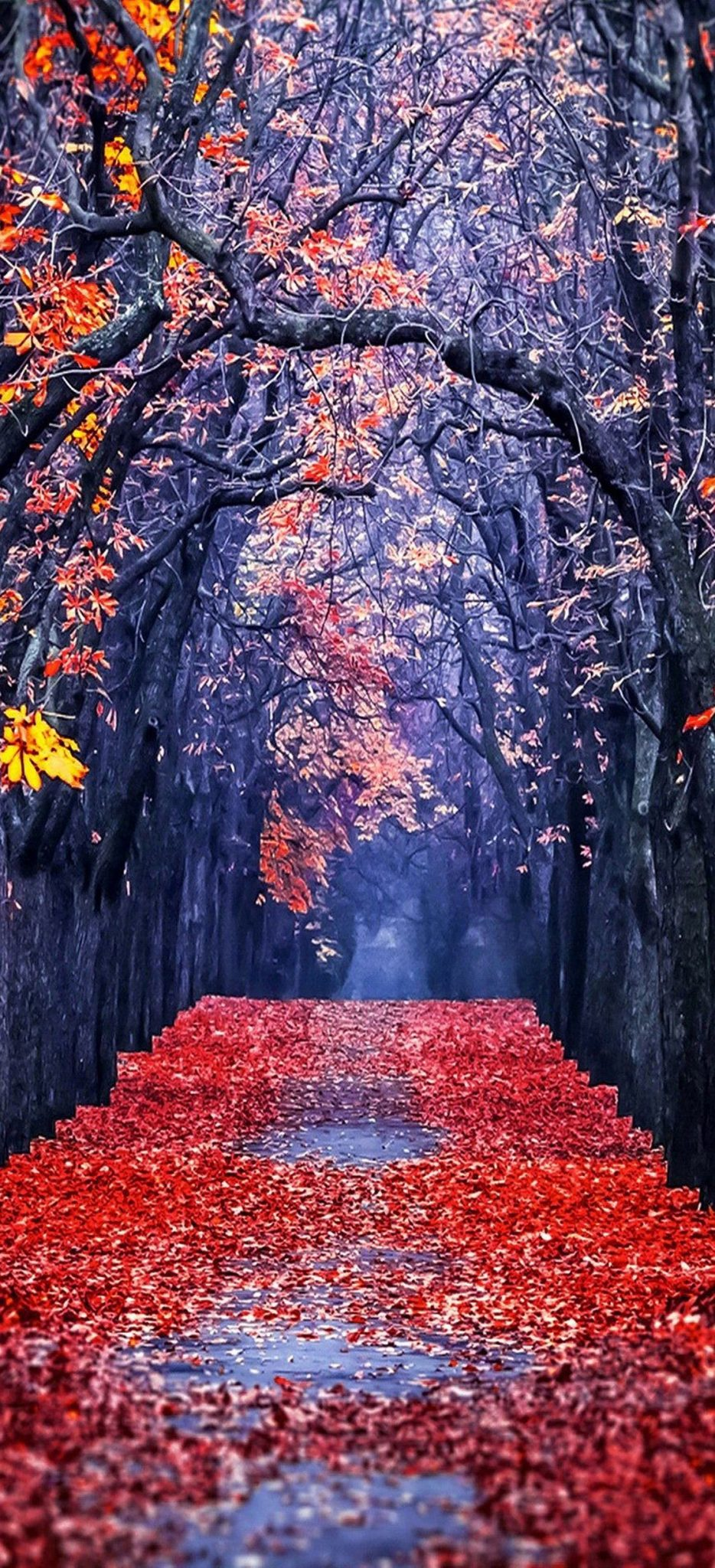 iPhonexAutumn Wallpapers HD