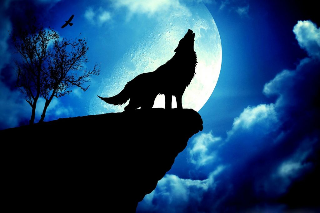 Download Free Wolf Wallpapers For Your Mobile Phone